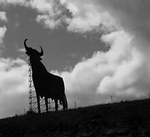 Osborne bull by Esther  Moliné
