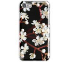 Nature - white blossoms in flower iPhone Case/Skin