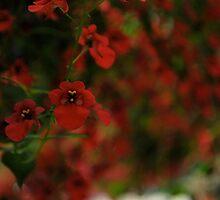 Red unfocused (macro)  by Jeff Stroud