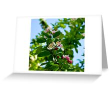 Apple Blossom #2 -  May 2010 Greeting Card