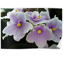 The Mother-in-Law's African Violets Poster