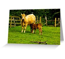 Mother & Calf Greeting Card