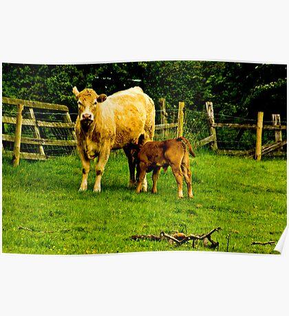 Mother & Calf Poster