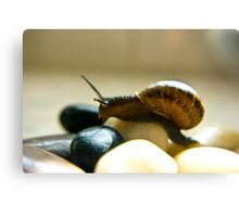 Snail #5 Canvas Print