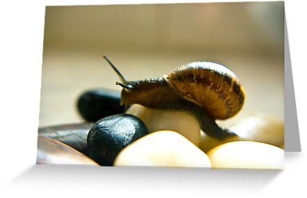 Snail #5 by Trevor Kersley