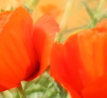 Klatschmohn by pixel-cafe .de