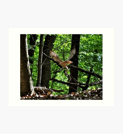 red tail hawk with prey Art Print