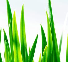 Tall Grasses by Jessica Dzupina