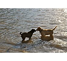 dog greetings in the river Photographic Print