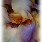Multiplicity of Irises by Elizabeth Bennefeld
