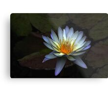 Low Key Waterlily Metal Print