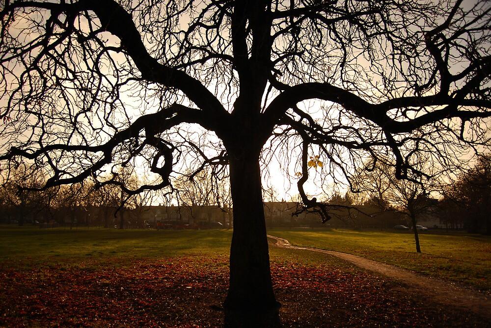 my tree by Michael Bateman