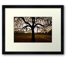 my tree Framed Print