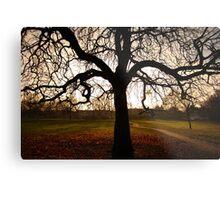 my tree Metal Print