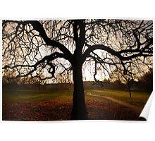 my tree Poster