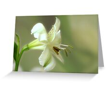 Tranquil Beauty Greeting Card