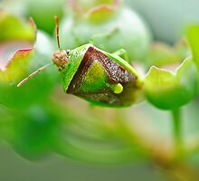 Beetle on the blueberries by Susana Weber