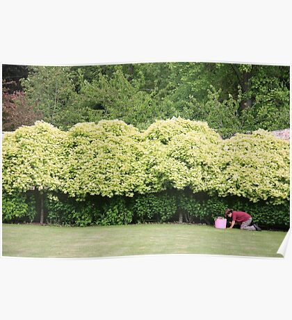 Working in the garden Poster
