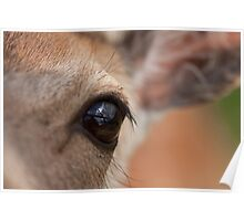 Aye Aye my deer? Poster