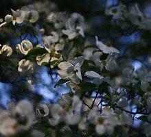 blossom burst by Russell Bradshaw