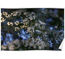blossom burst Poster