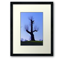 The Porcipine Tree Framed Print