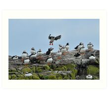 """puffin """"Ok you lot, volcanic ash or not, I'm still going"""" Art Print"""