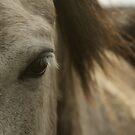 Horse by Sam Mortimer