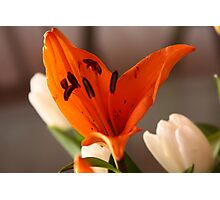Lily on fire. Photographic Print