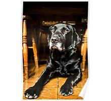 Henry the Handsome Black Labrador! Poster