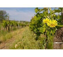 Wine Buddies Photographic Print
