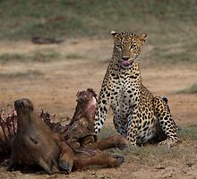 Leopard With Kill by Neil Bygrave (NATURELENS)