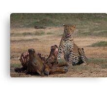 Leopard With Kill Canvas Print