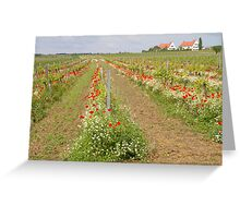 Vineyards Greeting Card