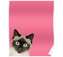 Peeking Siamese Cat - Funny cat meme for cat lovers, cat ladies gifts for cat people Poster