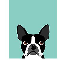 Logan - Boston Terrier pet design with bold and modern colors for pet lovers Photographic Print