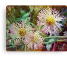Pretty Daisy-Like Flowers Canvas Print