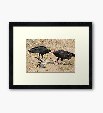 New World Vultures ~ Turkey & Black Vulture Framed Print