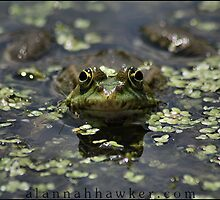 Frog by Alannah Hawker