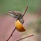Orangeade by Barb Miller