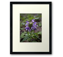Wild Thing ~ Heal All Framed Print