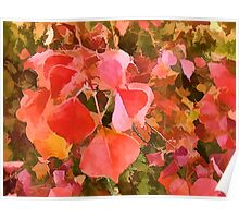Chinese Tallow tree leaves in Autumn Poster
