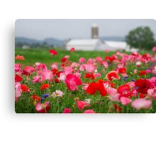 Red and White Poppy Canvas Print