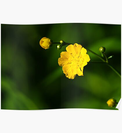 Yellow Wild Flower Poster