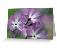 Primrose - Morning Light Greeting Card