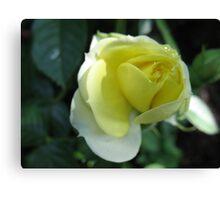 In the Lemon Softness of Petals Canvas Print