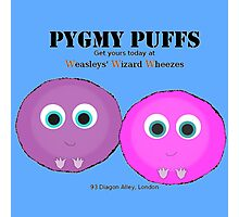 Pygmy Puffs For Sale Photographic Print