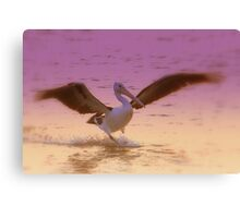 Pelican  Coloured Canvas Print