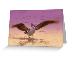 Pelican  Coloured Greeting Card