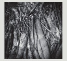 Fig Tree Roots by col hellmuth